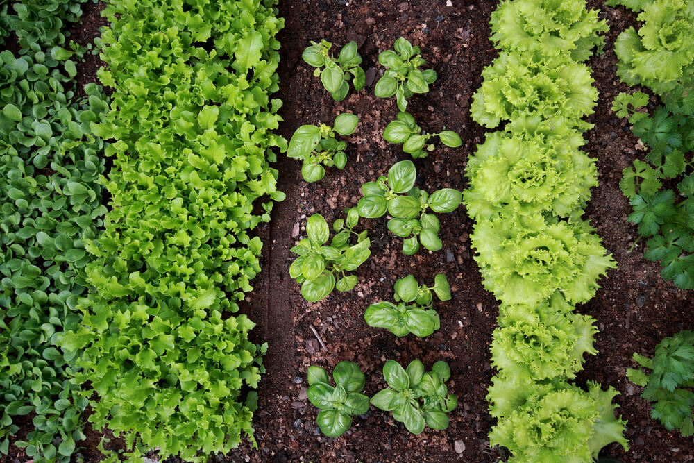 Vegetable Gardening and Landscaping Design Ideas in Guelph